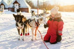 Husky respite trip in Finland