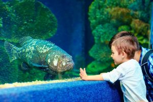 Father and son on UK respite day at acquarium